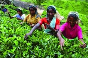 【尚·深度】斯里兰卡8天*茶园探秘<世界文化遗产,锡兰茶园品正宗红茶,海边火车>