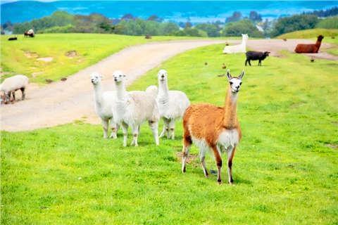 澳洲4城.新西兰北岛精华12天<大堡礁.华纳电影世界.蓝山.毛利>