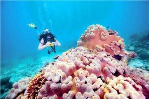 澳洲-【典·博览】澳洲(悉尼、凯恩斯、布里斯本、黄金海岸、墨尔本)、新西兰南北岛14天*全赏<大堡礁,热带雨林,蓝山国家公园,奇趣捉蟹,百年古董蒸汽船>