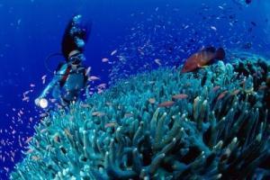 澳门-【自由行】帕劳6天*机+酒*指定酒店*澳门往返*等待确认<世界著名潜水地之一、牛奶湖、大断层、软硬珊瑚区>