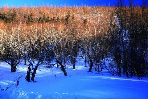 哈尔滨、雪乡、双飞6天*滑雪*哈雪梦境篝火晚会<深度入住两晚雪乡>