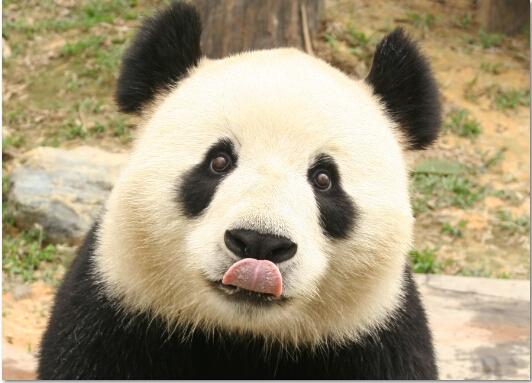 广州长隆野生动物世界期票特惠全票