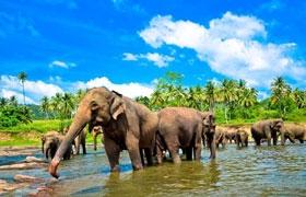 斯里兰卡-【尚·博览】斯里兰卡6/7天*旅拍*悠闲之旅<大象孤儿院,佛牙寺,荷兰城堡,海边火车>