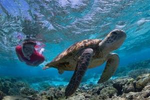 海岛-【尚·深度】澳洲(费沙岛、伊莉特夫人岛、悉尼、布里斯本)9天*纯玩*广州往返<大堡礁,世界第一大沙岛,龙柏树熊公园>