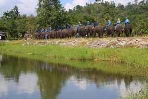 泰国-泰国【当地玩乐】代订清迈原生态大象营与大象互动 +大峡谷蹦极一日游*等待确认