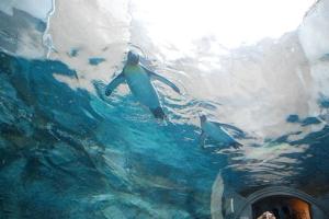 列支敦士登- 旭山动物园+男山酒造资料馆+雪之美术馆一日游 (中文小包团,舒适5座车)  .等待确认