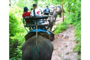 泰国-清迈美旺大象营+宁曼路+夜间动物园一日游.等待确认