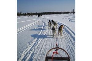 WIFI-<芬兰极光8日游>含小费极光之旅、赠WiFi、赠游爱沙尼亚首都塔林、坐追光专车、游圣诞老人村、狗拉雪橇、雪地摩托  .等待确认