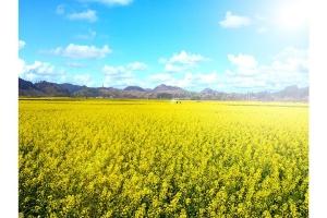 贵州-【尚·深度】贵州、安顺、兴义、动车4天*花海贵州*乐游<罗平油菜花,黄果树,马岭河大峡谷>
