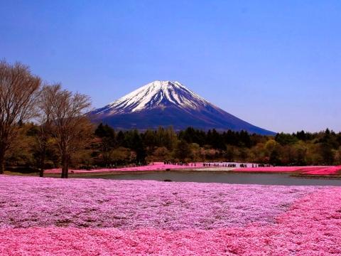 东京-魅力和风-本州优享.等待确认