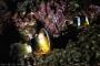 【尚·休闲】菲律宾海豚湾4天*潜水之都*广州直航往返<云不落山观景台,红树林观光,漫洋部落欣赏菲律宾特色表演>