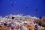 【佛山】美娜多5天*浮潜*探秘之旅*广州直航<豪华酒店,布那肯出海浮潜,深潜教学课程,东达娜湖,FSCJ>