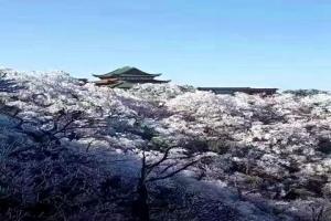 莽山-【尚·休闲】湖南、郴州、高铁3天*休闲度假*单高单火<莽山,东江湖>