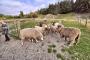 【当地玩乐】单订新西兰皇后镇瓦尔特峰高地牧场电动车越野之旅