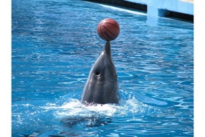 普吉岛-泰国【当地玩乐】代订普吉岛海豚表演+接送*等待确认