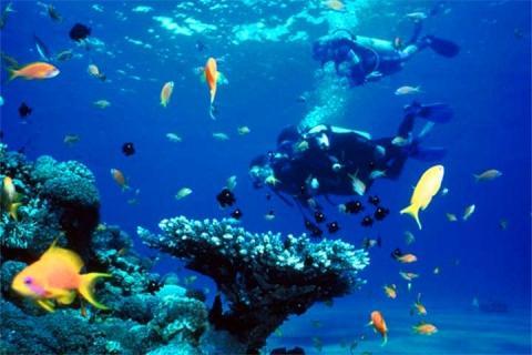马尔代夫 马累-【自由行】马尔代夫(居民岛)5天*机+酒*广州往返*等待确认<体验当地民风民情、经济型、背包游客>