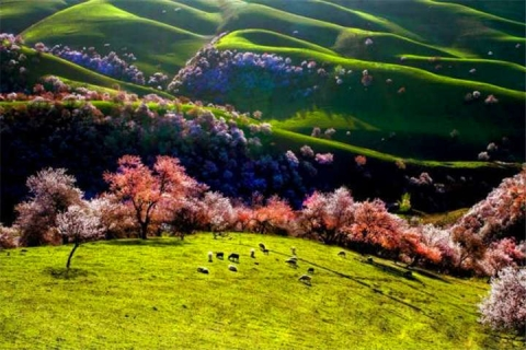<踏春赏花>新疆伊犁吐鲁番奎屯三飞8天·赛里木湖·沙漠