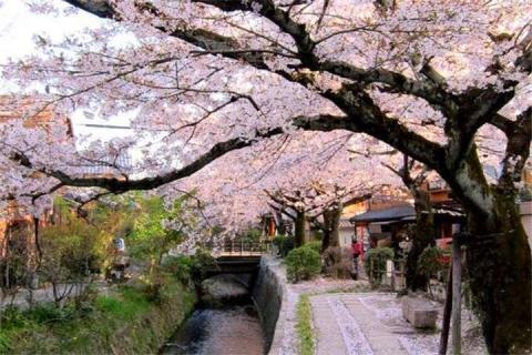 【尚•深度】日本『春之物语』东京日光轻井泽花海美景温泉6天