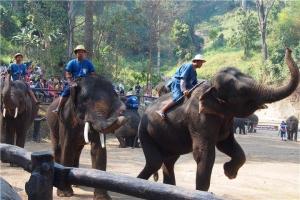 泰国-泰国【当地玩乐】代订清迈骑大象+坐竹筏+长颈族 一日游(A)*等待确认