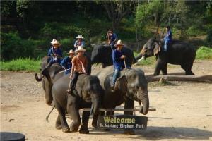 泰国-泰国【当地玩乐】代订清迈美旺大象营 骑大象给大象洗澡半日游*等待确认