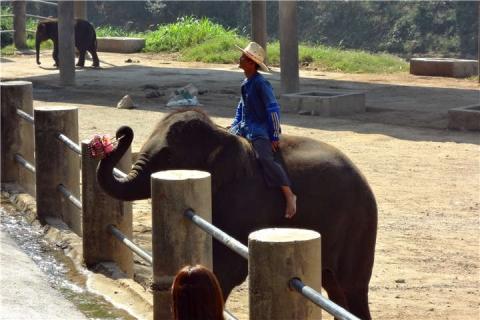 泰国【当地玩乐】代订清迈骑大象+丛林飞跃+坐竹筏一日游|跟团游