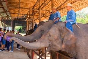 泰国-泰国【当地玩乐】代订清迈南邦大象保护中心一日游*等待确认