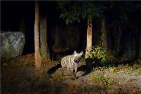 泰国【当地玩乐】代订清迈双龙寺+夜间动物园(黑森林用餐半日游)*等待确认