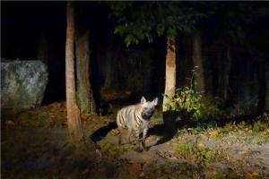 泰国-泰国【当地玩乐】代订清迈双龙寺+夜间动物园(黑森林用餐半日游)*等待确认