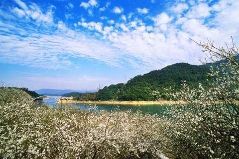【花城看花】从化1天*流溪河森林公园*游船上猴岛*环湖栈道