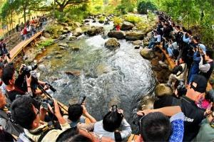 赏花-【生态】从化1天*石门森林公园