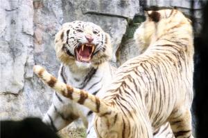 广州长隆-【游览*乐园】番禺1天*广州长隆野生动物世界