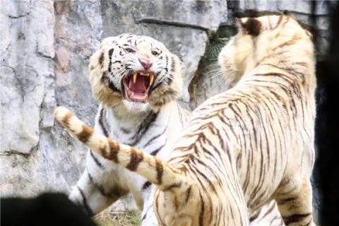 番禺1天.广州长隆野生动物世界