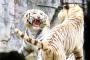 【游览*乐园】番禺1天*长隆香江野生动物世界*含去程交通