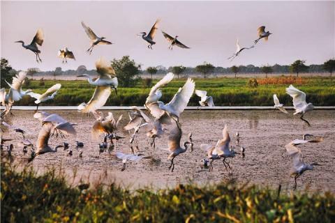 南沙-【生态】南沙1天*湿地公园*十九涌海味街