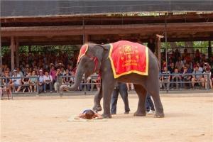 泰国-泰国【当地玩乐】代订芭堤雅真理寺门票+骑大象慢行+芭提雅地区接送