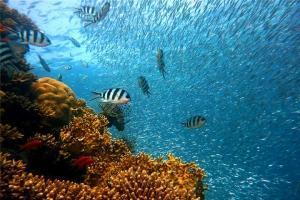 泰国-泰国【当地玩乐】代订普吉皇帝岛体验潜水一日游 (中文潜导)*等待确认