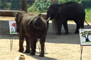 泰国-【泰国曼谷当地一日游】大皇宫+玉佛寺+三攀大象表演场舆鳄鱼湖+三攀文化村