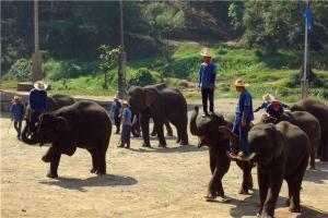 泰国-泰国【当地玩乐】代订甲米博尔托儿村+划皮划艇+骑大象一日游*等待确认