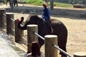 泰国-泰国【当地玩乐】代订甲米翡翠潭、温泉瀑布、老虎洞寺庙、骑大象4合1一日游*等待确认