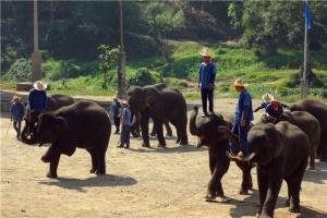 泰国-【泰国清迈当地一日游】兰花园+好运大象营+竹筏漂流+丛林飞跃
