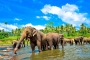 【尚·休闲】斯里兰卡、马尔代夫8天*畅游之旅*广州往返<双重美妙,享悠闲海岛假期,佛牙寺,大象孤儿院>
