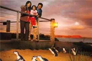 澳大利亚-【当地玩乐】澳洲墨尔本市区+企鹅岛一日游