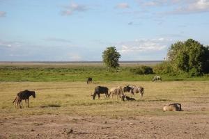 肯尼亚-【跟团游】肯尼亚9天*动物大迁徙*北京上海往返*等待确认<精华之旅>