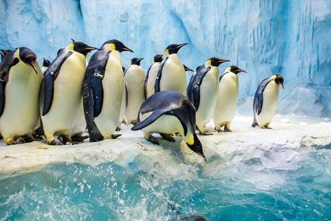 珠海-珠海长隆企鹅酒店住宿套票+交通二天(企鹅快线/探险/单园)