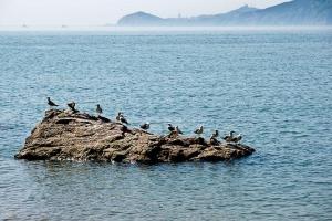 大连-【典·全景】山东、青岛、蓬莱、威海、大连、旅顺、双飞5天*美食<半岛大连>