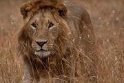 【尚·猎奇】肯尼亚10天*动物追踪*广州往返<入住2晚马赛马拉,桑布鲁国家公园,河马天堂奈瓦沙湖,火烈鸟新家园博格利亚>