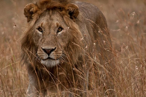 肯尼亚动物追踪10天.2晚马赛马拉.桑布鲁国家公园.河马天堂.火烈鸟新家园