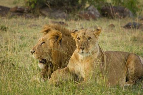 肯尼亚-【典·深度】肯尼亚8天*动物追踪<马赛马拉动物追踪,河马天堂纳瓦沙湖,地球遗址东非大裂谷,原汁原味特色烤肉餐>