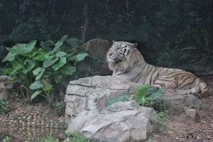 长隆-【湛江出发】广州长隆香江野生动物园纯玩2天