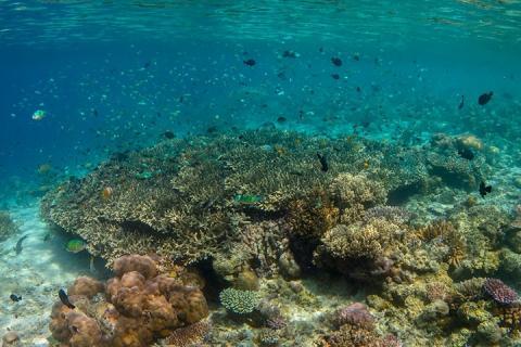 沙巴-【沙巴一日游】珊瑚大堡礁1日游